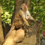 Сафари в Национальном парке Яла