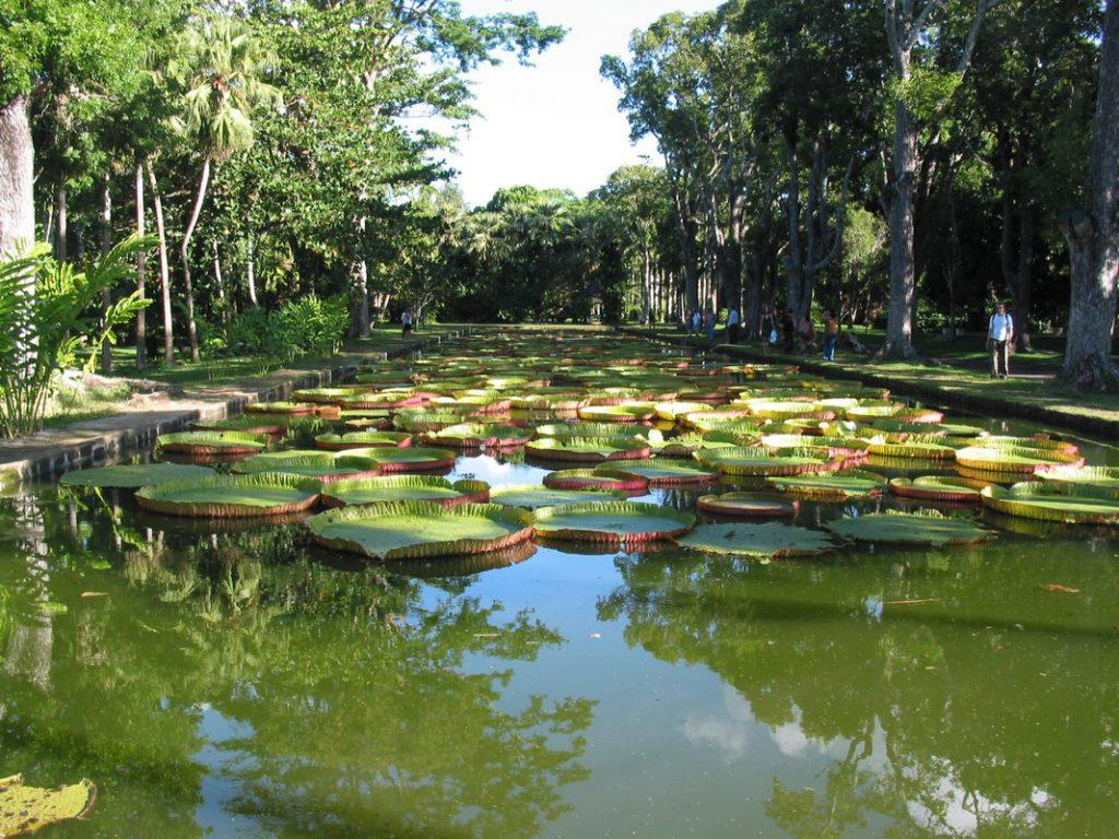 Ботанический сад Виктории